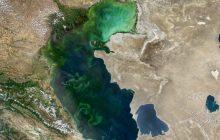پیشبینی کاهش تراز آب دریای خزر/ تغییر اقلیم زیستبومهای ساحلی خزر را تهدید میکند