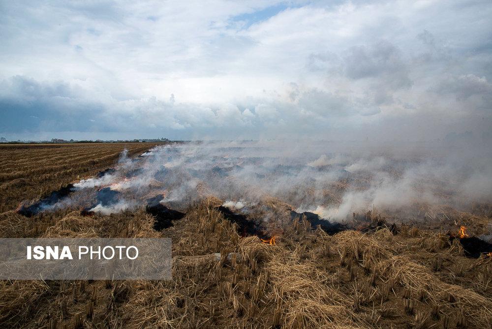 مزارعی که به آتش کشیده میشوند