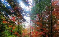 پاییز در تلاطم رنگهای مسحورکننده شاخسارها در جنگل های چهاردانگه+ تصاویر
