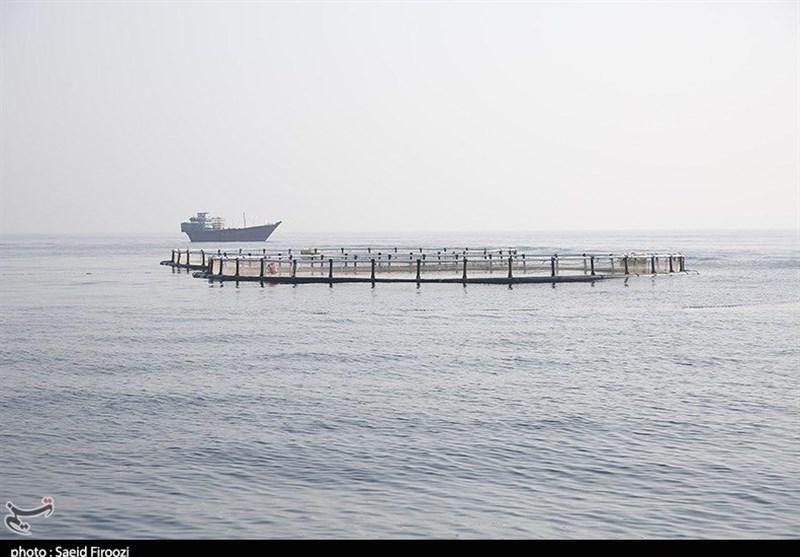 سیلاب 70 میلیارد ریال به مرازع پرورش ماهی مازندران خسارت وارد کرد