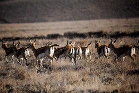 نابودی ۹ دهم از اندوختههای جانوری ایران طی نیم قرن اخیر