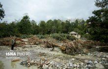 چرا دیگر جنگلها ضربهگیر باران سیل آسا نیستند؟