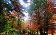 این پاییز حیرت انگیز ...!