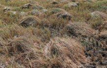 برپایی همایش ملی برنج در مازندران گامی در جهت حمایت از تولیدات داخلی است