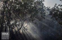 ویدئو / فاجعه در جنگلهای شمالی ایران