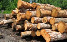 کشف 10 تن چوب جنگلی قاچاق در چهاردانگه