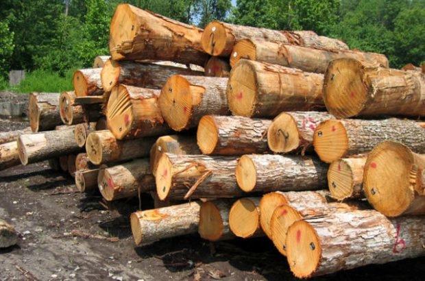 کشف 25 تن چوبآلات جنگلی قاچاق در ساری