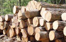 کشف 20 تن چوب جنگلی قاچاق در ساری