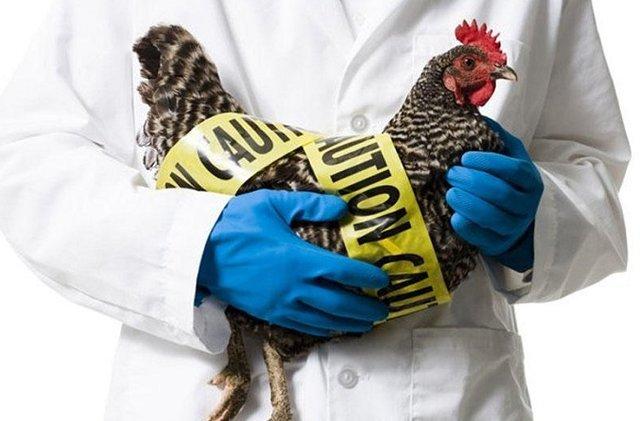 آنفلوآنزای پرندگان در مازندران کنترل شده است