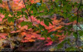 پاییز جشنواره رنگ ها در چهاردانگه