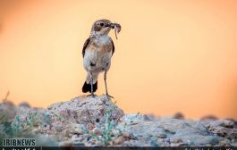 تصاویری از پارک ملی کیاسر