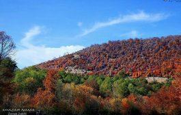 طبیعت پاییزی جنگل های چهاردانگه