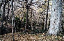 مازندران| دولت امکانات کافی برای حفاظت از جنگلهای شمال اختصاص دهد