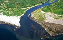 کهنترین جنگلهای دنیا با انتقال آب خزر چه بلایی سرش میآید؟