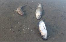 تلف شدن بیش از 200 ماهی قزلآلا خال قرمز+ فیلم