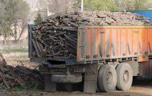 اتهام 6 زن به قاچاق چوب در مازندران