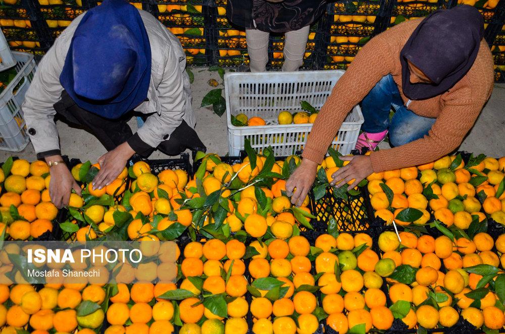 چرخیدن قیمت میوه شب عید روی هوا