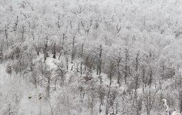گزارش تصویری از بارش برف در چهاردانگه
