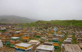 آزادسازی واردات زنبور ملکه در دست انداز کارشکنیها