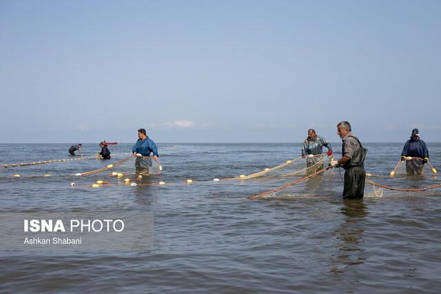 در خرید ماهی دریای خزر چه نکاتی را رعایت کنیم؟