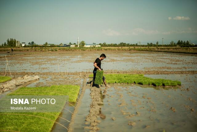 چرا مازندران در فصل کشاورزی دچار کمبود آب میشود؟