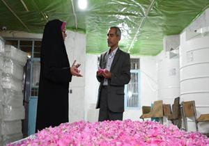 برداشت یک تن گل محمدی در دودانگه