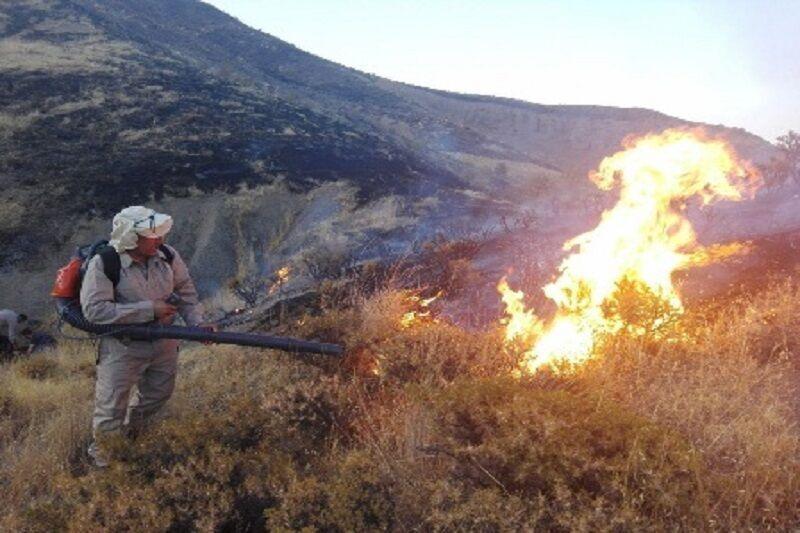 دستهای پنهان پشت آتش سوزیهای سریالی میانکاله مازندران