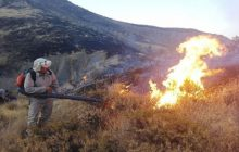 دست های پنهان زمین خواران پشت آتش سوزی های سریالی میانکاله مازندران