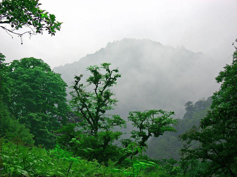علل تخریب جنگلهای هیرکانی و راههای مقابله با آن
