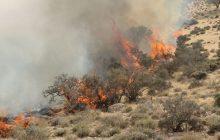 وزش باد اطفای آتش در پناهگاه حیات وحش میانکاله را کند کرد