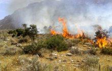 پارک حیات وحش میانکاله دچار آتش سوزی شد