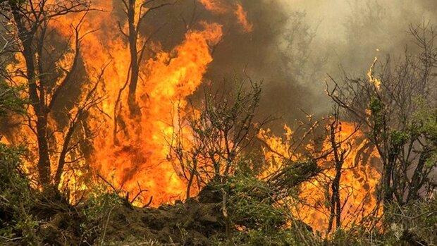آتش سوزی منطقه جنگلی ولینگن عباس آباد مهار شد