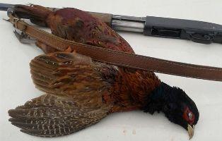 کشف چهار قبضه سلاح شکاری غیر مجاز در چهاردانگه