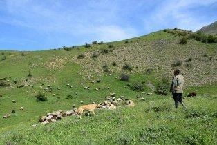 آیین قرق شکنی مراتع در روستای اروست بخش چهاردانگه برگزار شد