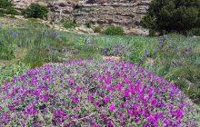 گزارش تصویری از مراتع بسیار زیبای دار کوه (داراب کوه) چهاردانگه