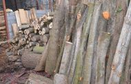 کشف 10تن چوب جنگلی قاچاق در ساری