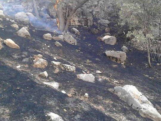 آتش سوزی در جنگل گلوگاه مازندران