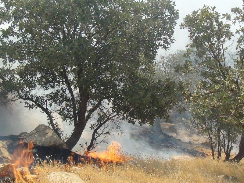 آتش سوزی ذخیرگاه جنگلی حسن آباد کجور نوشهر خاموش شد