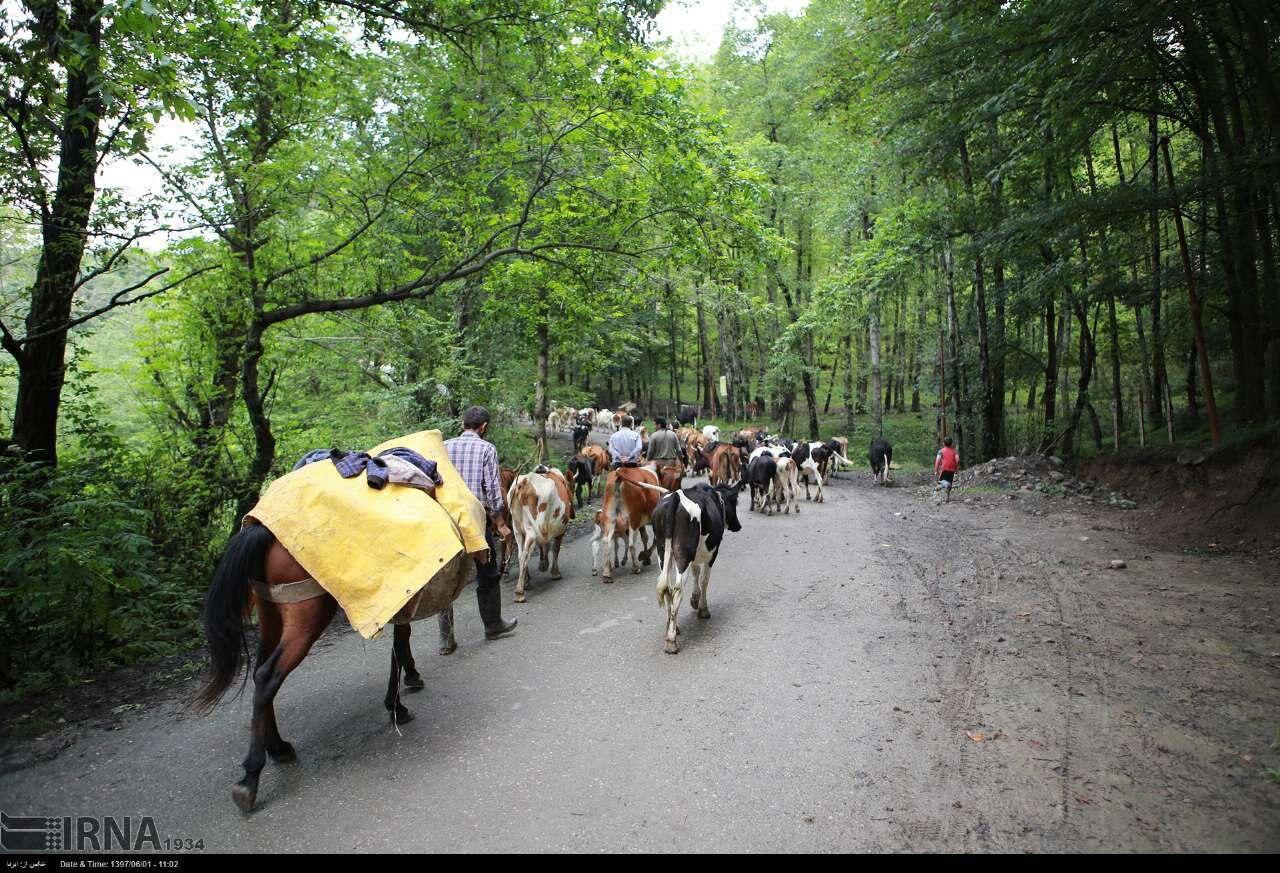 ثبت جنگل های هیرکانی و تنها سوال جنگل نشینان مازندران