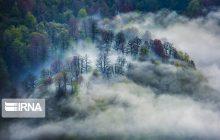 جنگلهای هیرکانی از شرایط موجود تا وضعیت موعود