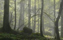 درخت 5 میلیاردی با 10 میلیون تومان جریمه!