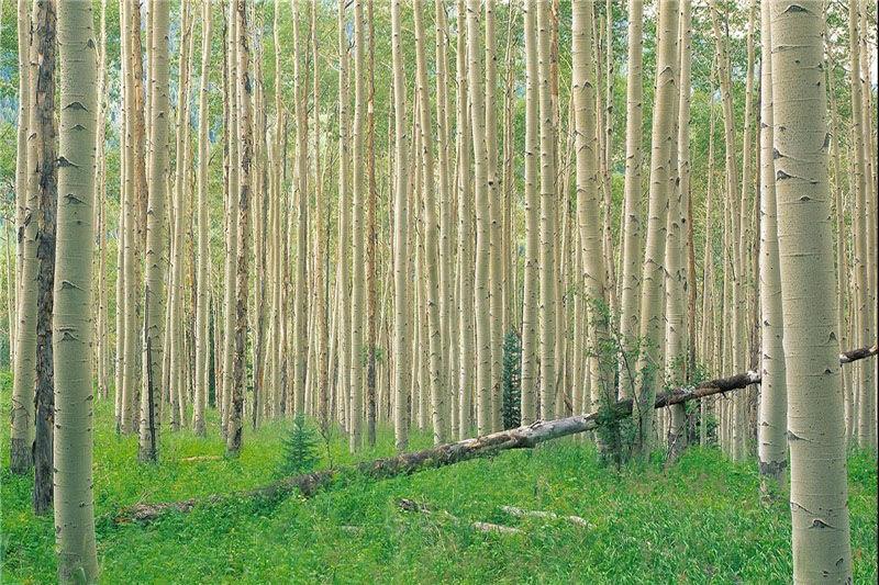 زراعت چوب؛ نسخه بی دارو برای درمان چند درد