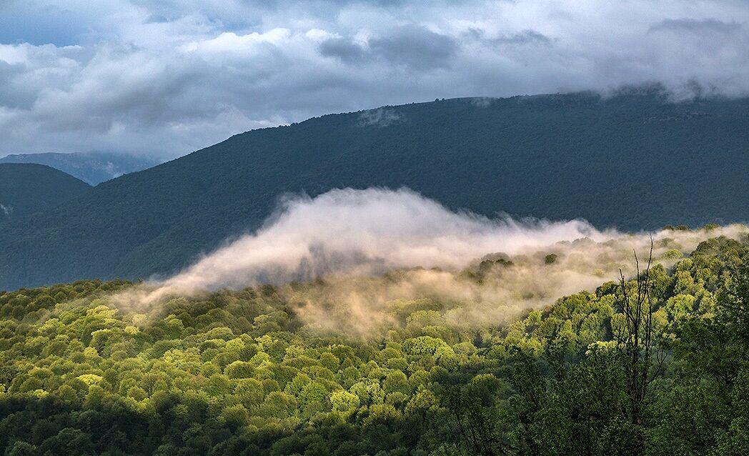 پیامدهای ثبت جهانی جنگلهای هیرکانی در یونسکو