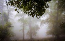 ۳۰۷ هزار هکتار از جنگل های هیرکانی به ثبت جهانی رسید