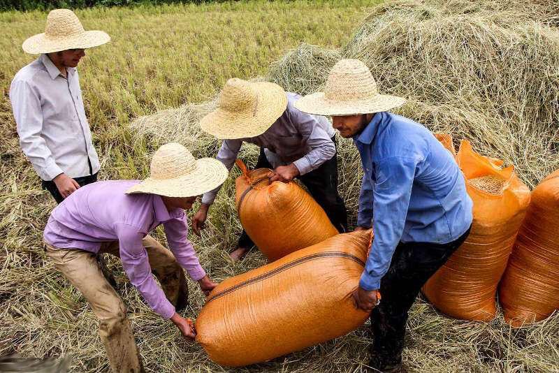 افزایش ۱۰ درصدی کشاورزی ارگانیک محور برنامه وزارت جهاد است