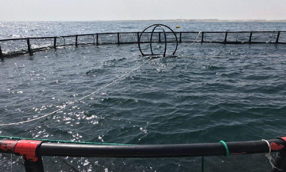 تعطیلی بزرگترین مرکز تولید و پرورش ماهی در قفس شمال کشور در نوشهر