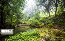 سهم اندک مازندران از سفره ثبت جهانی جنگلهای هیرکانی