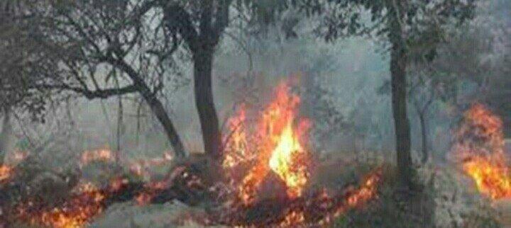 سه و نیم هکتار از جنگلهای چهاردانگه در آتش سوخت