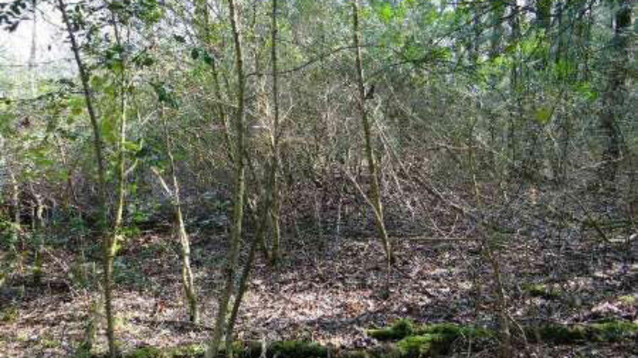 ماندگاری شمشادهای خشک عامل تهدید یا فرصت برای جنگلهای شمال