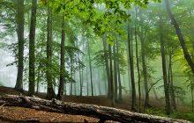 جنگلهای بولا، زیستگاه پلنگ و پازن در مازندران